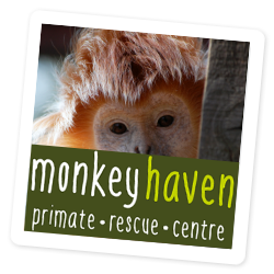 Owl and Monkey Haven on the Isle of Wight